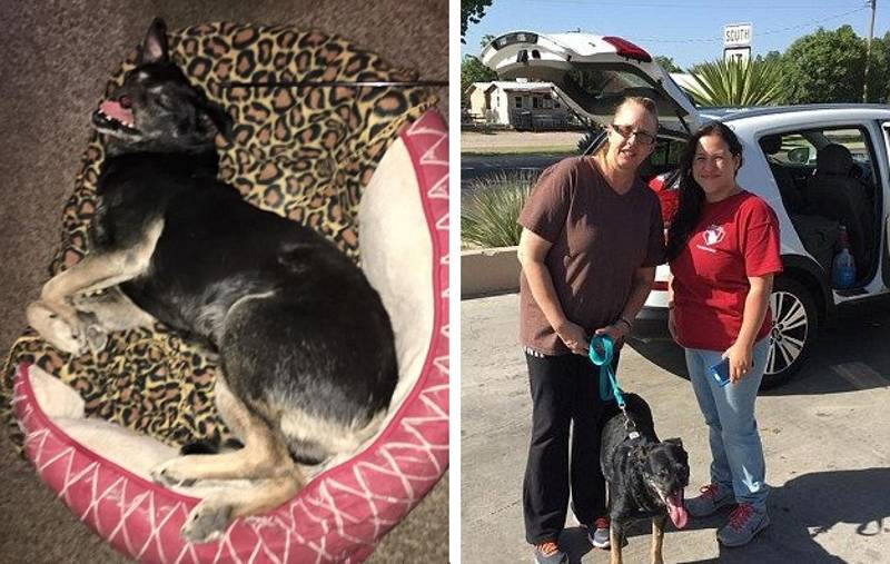 'Anubis' The Street Dog Whose Nose Was Brutally Cut Off Finds Perfect Home In Texas