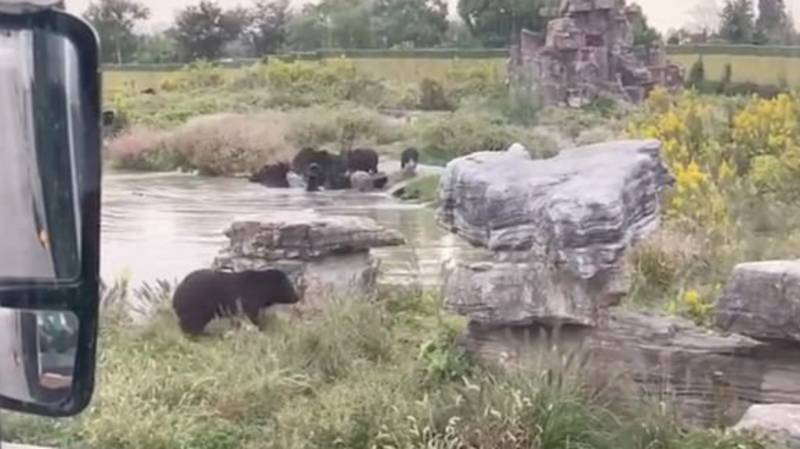 Zookeeper Dies After Being Mauled By Black Bears In Front Of Visitors