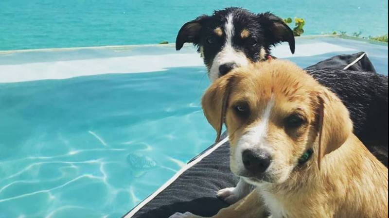 Caribbean Island Where You Can Play With Rescue Dogs Looks Like Heaven