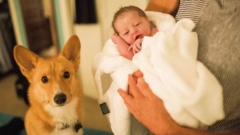 Faithful Dog Stays By His Human's Side As She Gives Birth