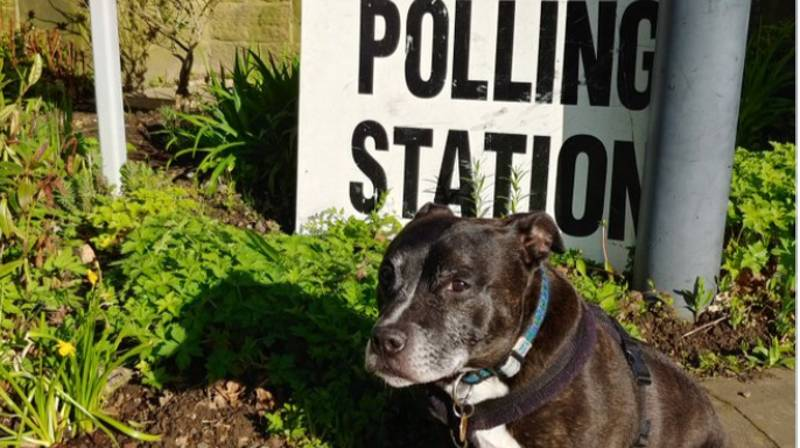 Dogs At Polling Stations Returns For Another Year