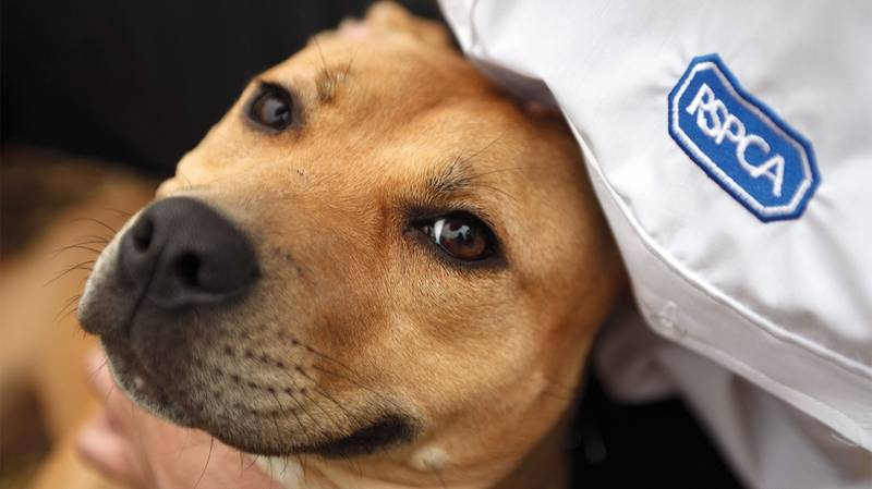 The RSPCA Receives A Call For Help Every 30 Seconds
