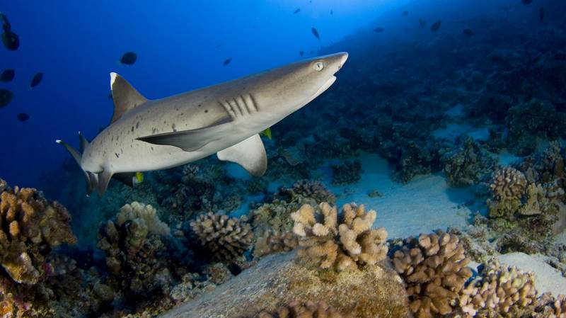 12-Year-Old Tourist Loses Arm In Shark Attack In Egyptian Resort