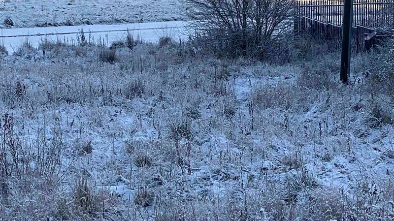 Man Challenges Twitters Users To Spot Dalmatian Having A Poo In Snow