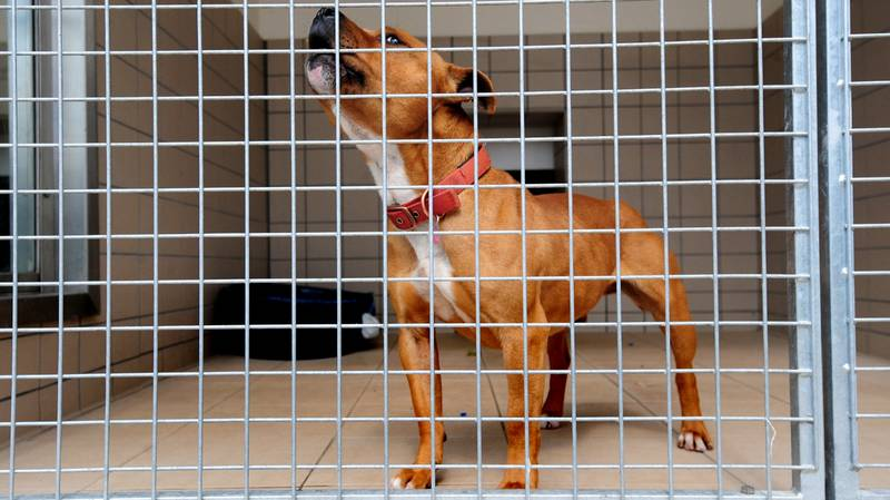 Man Considering Leaving Wife After Claiming She Put His Dog In Pound And Said It Ran Away