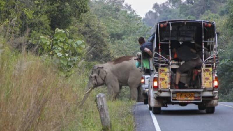 Elephants Reclaim Popular National Park In Thailand Amid Lockdown