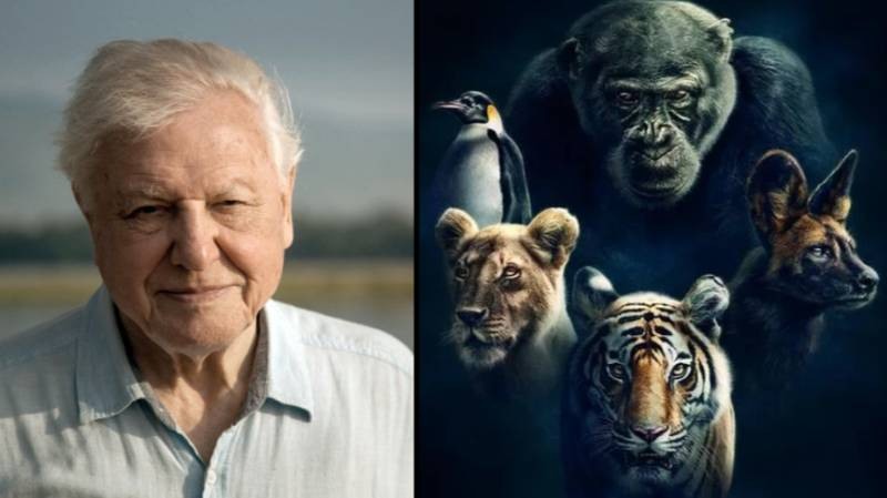Dynasties: David Attenborough's New Series Is Like Nothing He's Ever Done Before