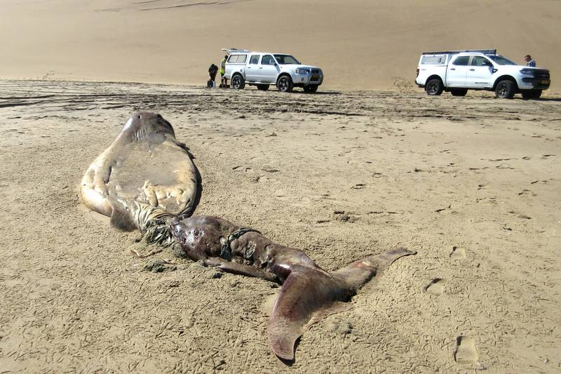 Bizarre Rotting Sea Creature Washes Up On The Coast Of Namibia