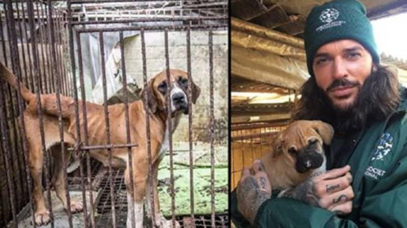 TOWIE's Pete Wicks Rescues 150 Dogs From Korean Meat Farm