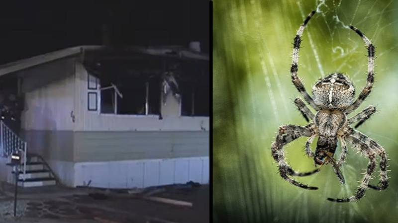 Man Accidentally Burns Down Home After Trying To Kill Spider
