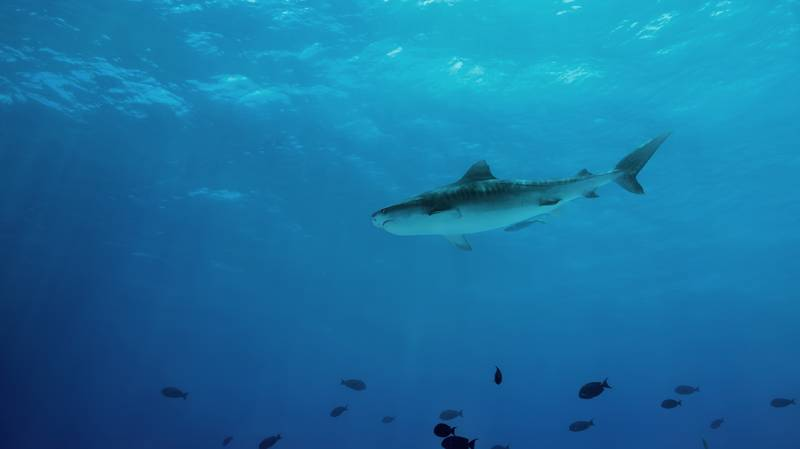 Sharks And Rays Disappearing At 'Alarming' Rate, Scientists Warn