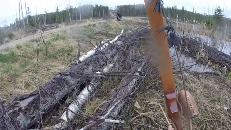 Bow And Arrow Hunter Crosses Paths With Bear And Instantly Regrets It