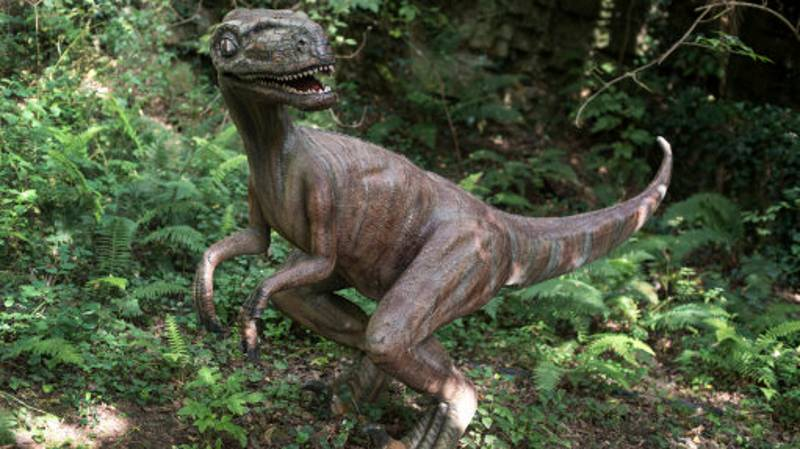 Scientists Stumped By Mummified 'Dinosaur' Corpse Found In A Substation