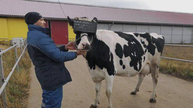 Russian Farmers Are Putting VR Headsets On Cows To Help Produce More Milk