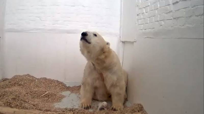 Baby Polar Bear Cub In Zoo Dies After Just 26 Days