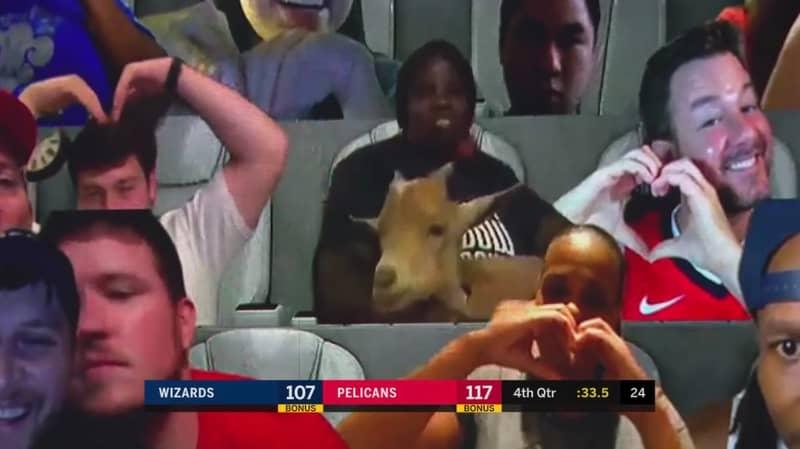 Virtual Fan Brings Goat To NBA Pelicans Game