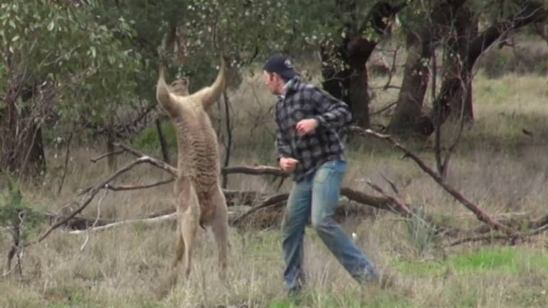 Zookeeper Who Punched Kangaroo In The Face Receiving Threats From Animal Activists