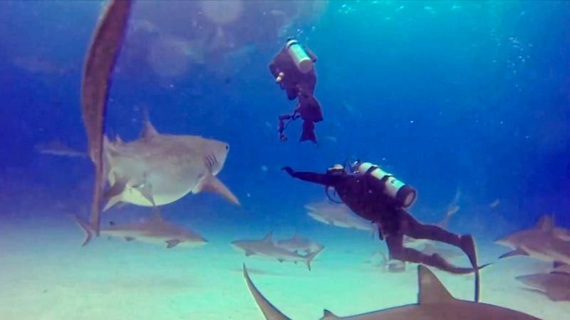 Diving Instructor Stops Shark From Biting One Of His Students