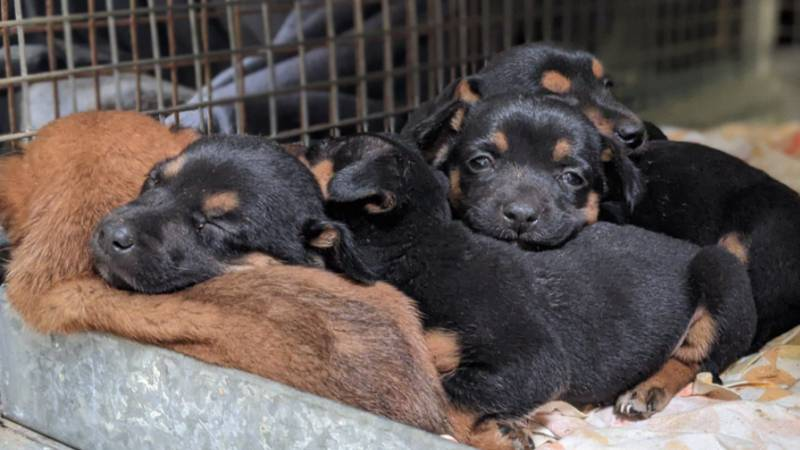 Australian Authorities Launch Investigation After Eight Puppies Were Found Dumped In Bin