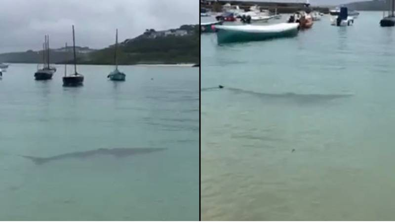 Nine Foot Shark Spotted In UK Harbour By Teenager