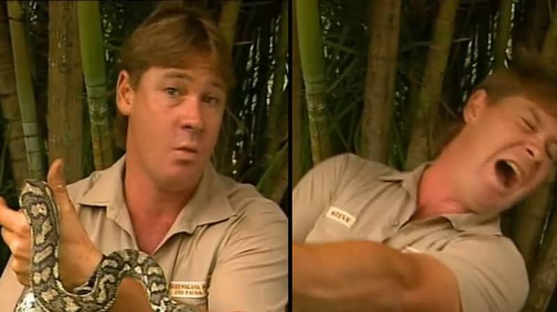 Amazing Steve Irwin Calls Snake Attacker A 'Son Of A Gun'