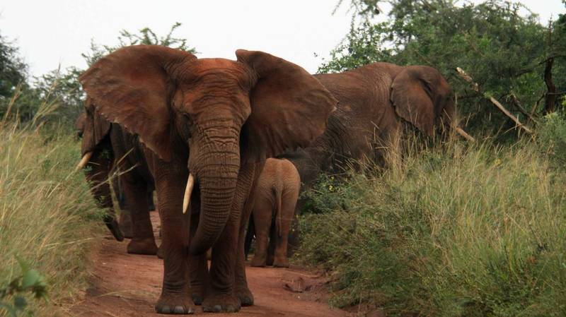 Three Poachers Shot Dead By Kenyan Park Wardens