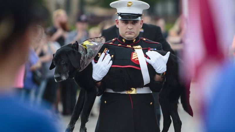 Ex-Service Dog Gets Military Farewell Before He's Put To Sleep
