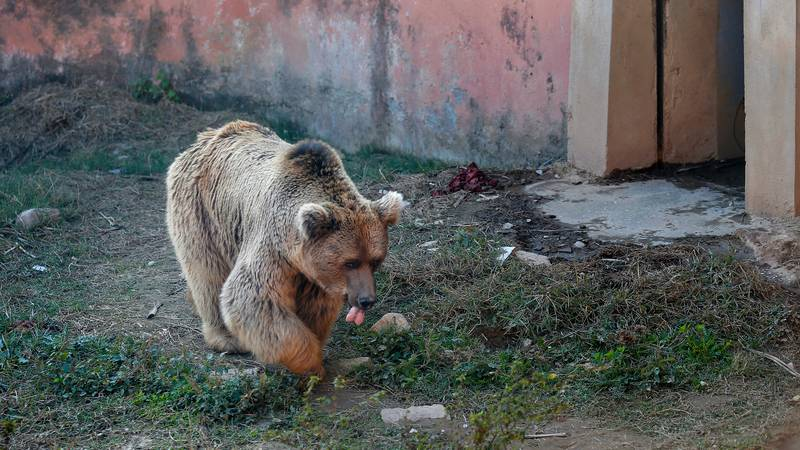 Two Bears Are Last To Leave 'World's Worst Zoo' In Pakistan