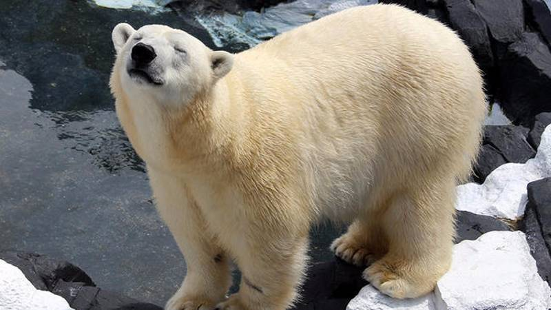 SeaWorld Polar Bear Dies After Being Separated From Her Companion
