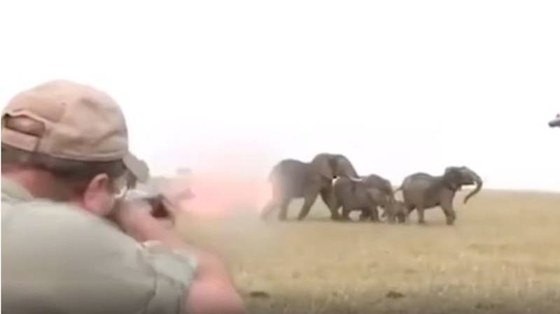 Elephants Charge At Hunters After They Shoot One Of The Herd From Close Range
