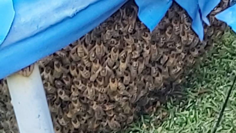 Family's Trampoline Invaded By Thousands Of Bees