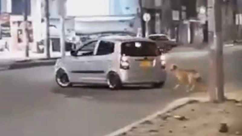 Heartbreaking Moment Dog Abandoned On Road Chases Car