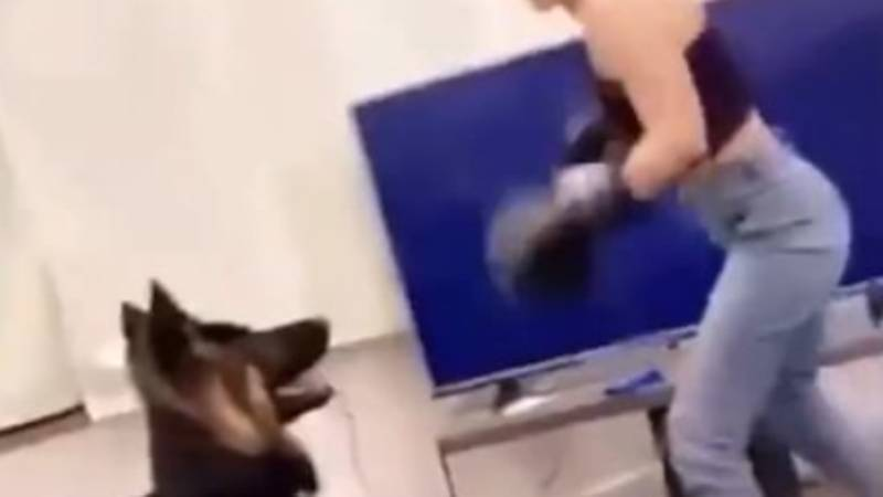 Investigation Launched After Video Showing Woman 'Boxing' Dog