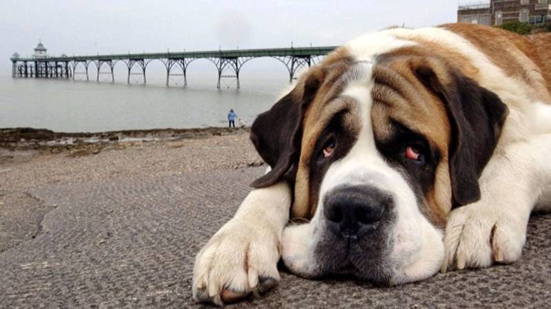 New Study Says We're More Moved By Dogs Suffering Than Humans