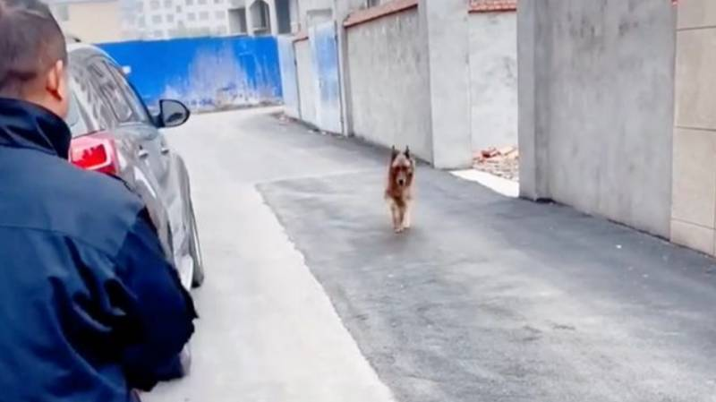 Video Captures Heartwarming Moment Retired Police Dog Is Reunited With Her Handler