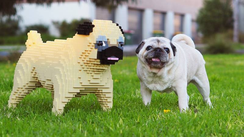 Melbourne's LegoLand Will Turn Your Pet Into Full Sized Lego Replica