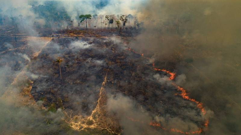 ​Amazon Rainforest 'Condemned To Destruction' With Fires Increasing Rapidly