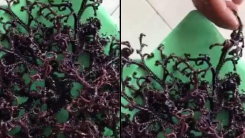 ​Mysterious Sea Creature With Hundreds Of Tentacles Found On Beach