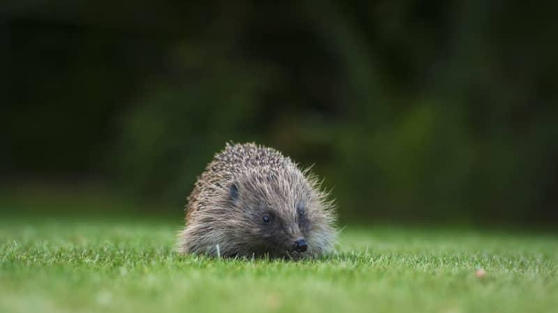 A Quarter Of British Native Mammals At Risk Of Extinction