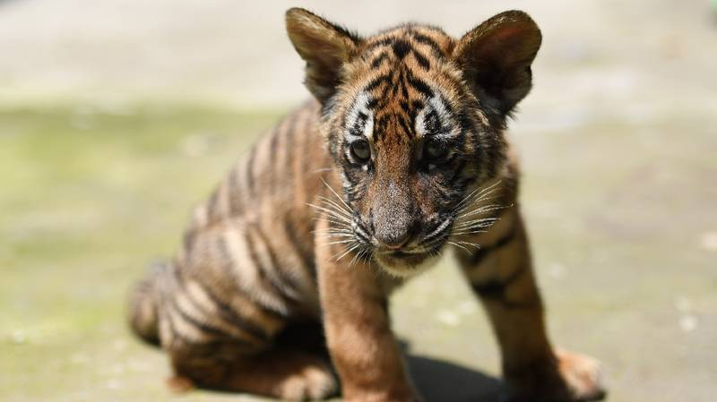 China Changes Laws Regarding Trade Of Tiger, Rhino, And Elephant Parts