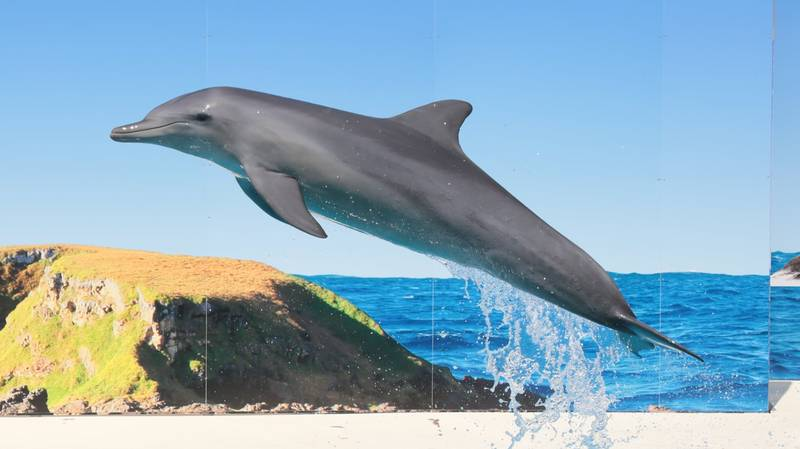 All Performing Dolphins In NSW Should Be Sent To Sanctuaries, Report Recommends