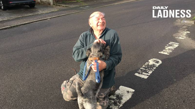 Veteran, 74, Has Walked Dogs Of Elderly And Ill People Every Day For 13 Years