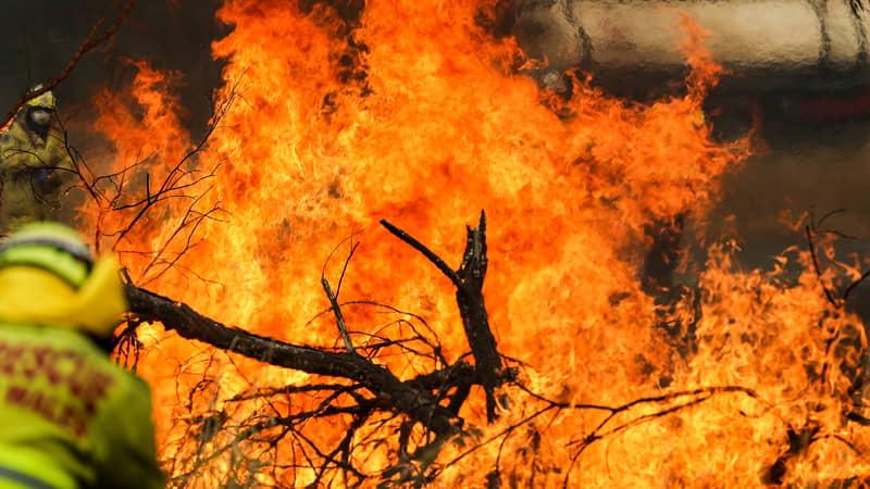 Celeste Barber's $51 Million Bushfire Fundraiser Cannot Be Divided Up Across Australia