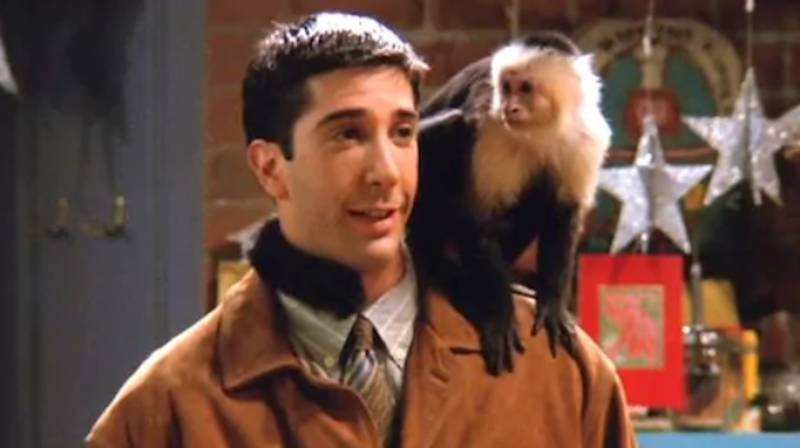 Monkey Who Played Marcel In Friends Is Returning In New Series