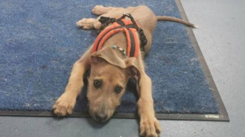 Huge Unwanted Dog Emergency, Animal Experts Warn