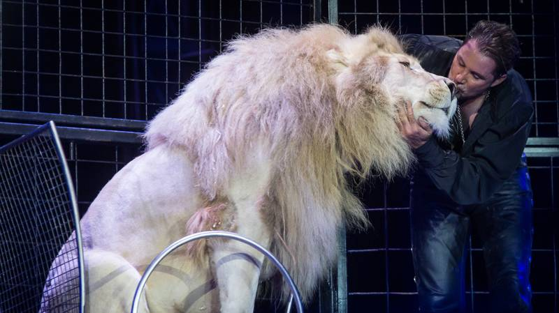 ​Scotland Bans Use Of Wild Animals In Travelling Circuses