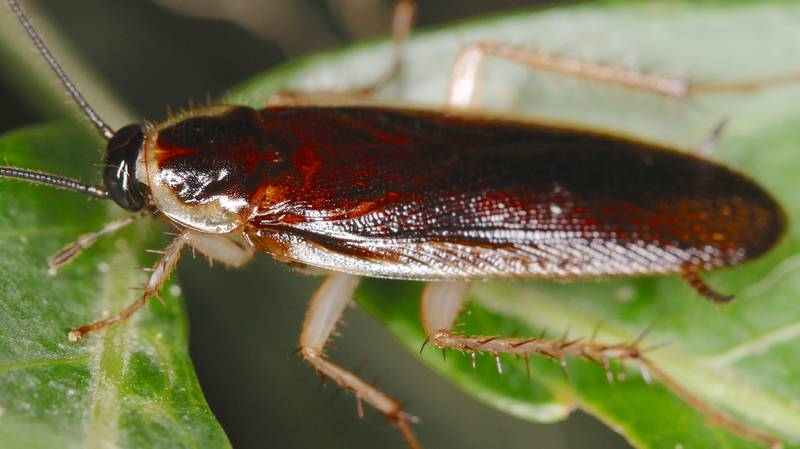 You Can Name A Cockroach After Your Ex This Valentine's Day