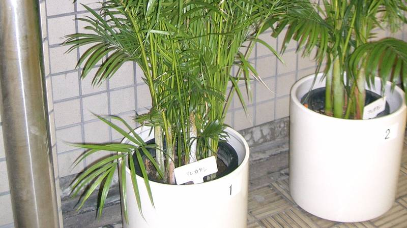 NASA Advise Keeping This Plant In Your Bedroom To Stay Healthy