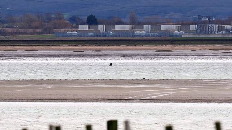 Whale Dies After Getting Stuck In The Thames Estuary