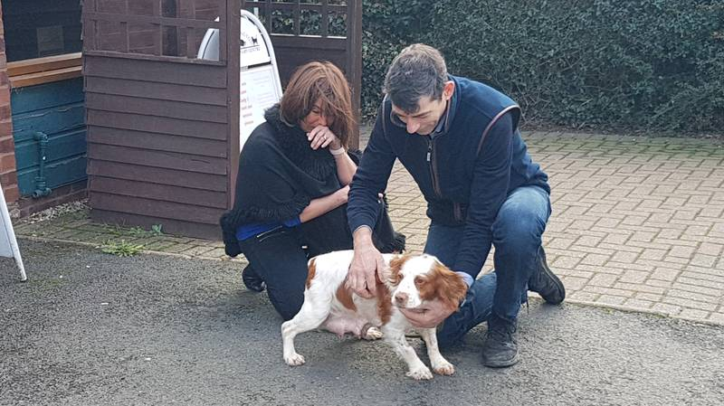 Dog Owners Reunited With Cocker Spaniel Six Years After She Was Stolen